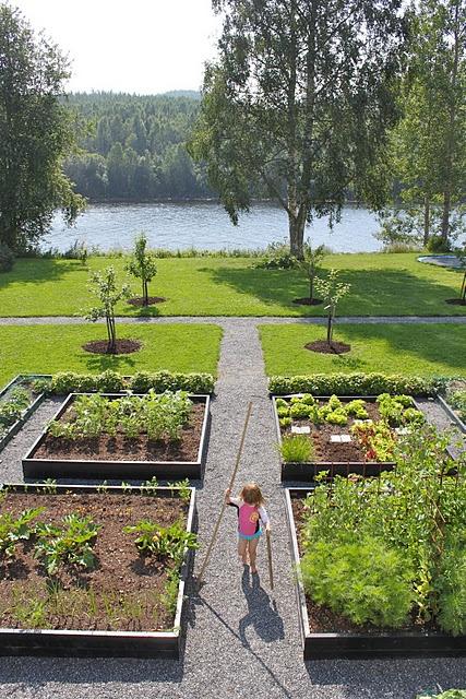 My kitchen garden.. in my dreams!