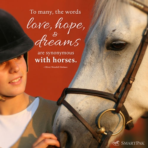 16 Valentine S Day Quotes To Share The Love: 17 Best Images About Equine Quotes On Pinterest