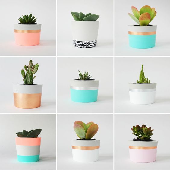 PLANT LIFE | CORAL & HERB