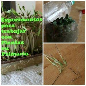 11 Actividades para trabajar con Plantas en Primaria   experCienciaexperCiencia