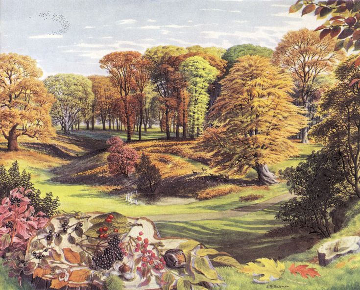 The Shell Guide to Trees and Shrubs illustrated by SR Badmin - October
