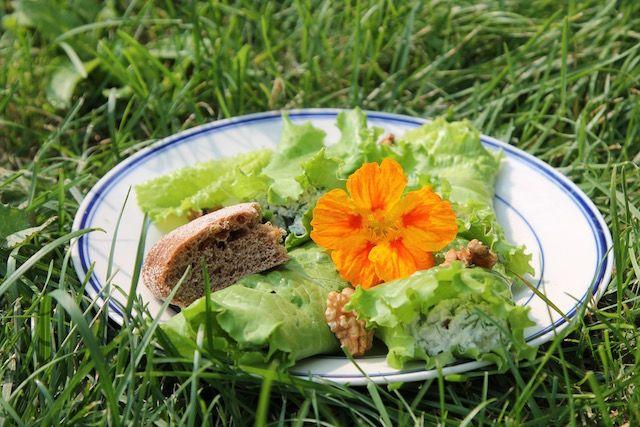 Летние закуски с салатом листовым хороши своим бесконечным разнообразием и простотой приготовления.#летниезакуски #салатлистовойрецепты