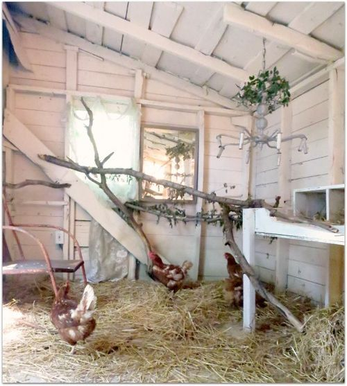Shabby chic chicken coop