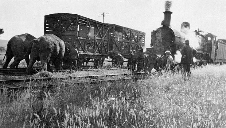[Elephants pushing a derailed goods trucks, Henty Station, pre 1930.] - Two elephants pushing a goods truck back onto the track after a circus train derailed at Henty Station. A group of people are watching the two elephants. The Dd-class steam locomotive No.794 is waiting on an adjacent track. No. 794 was built at the Victorian Railways Newport workshops in 1914 (built as Dd 948, reclassed and renumbered as Dd537, Dd794, D2 794 and then D3 630).