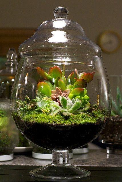 les 13 meilleures images du tableau plante sous verre sur. Black Bedroom Furniture Sets. Home Design Ideas