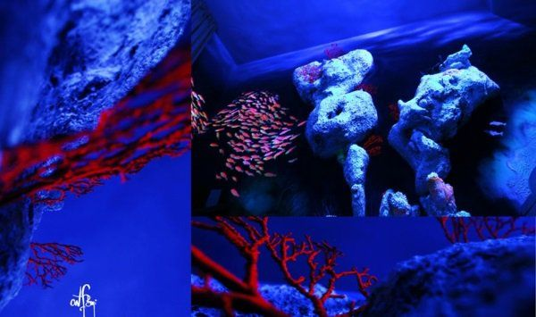 Fluoreszierende Farbe unterwasser
