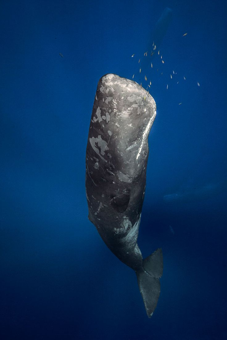 Think, Dauphin island sperm whale photo the abstract