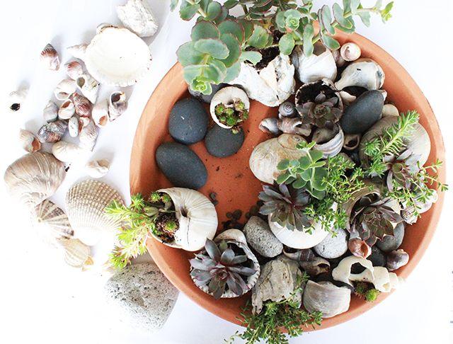 alisaburke: sea shell garden