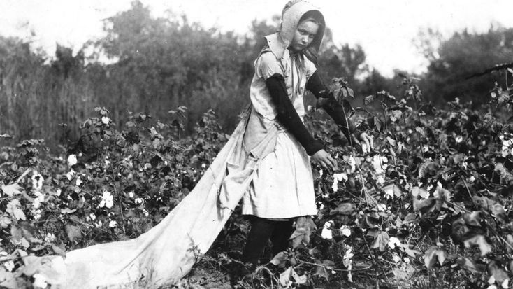 Callie Campbell, de 11 años, recoge entre 75 y 125 libras de algodón al día. Oklahoma, 16 de octubre de 1916