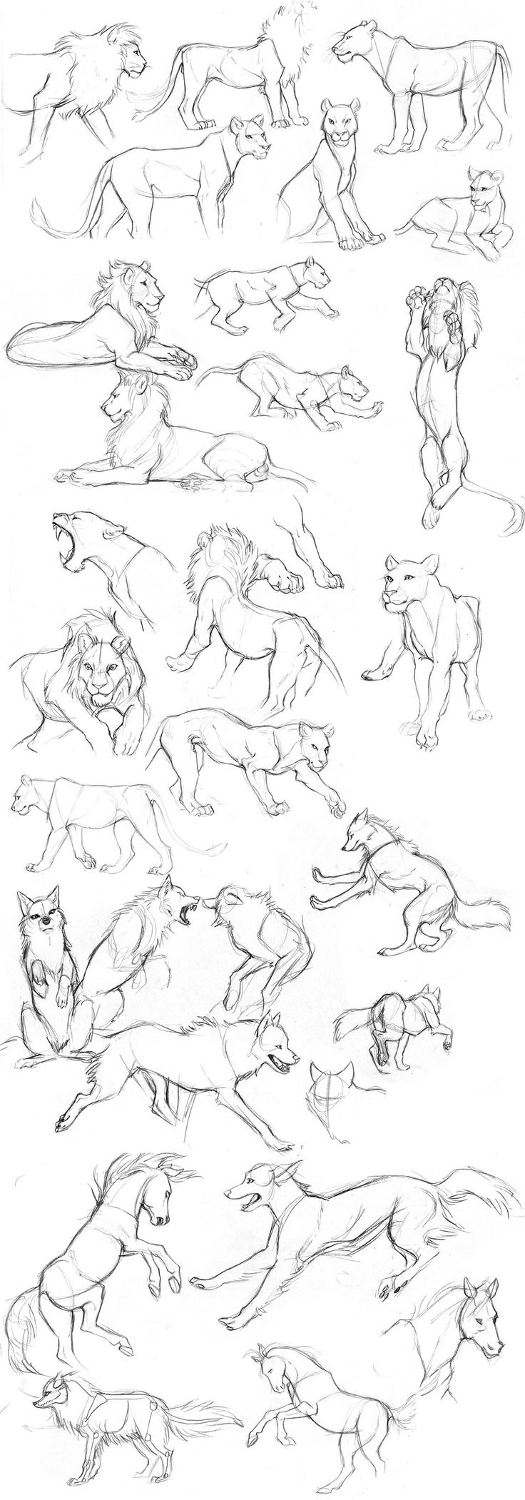 Animal sketches by Detkef on DeviantArt
