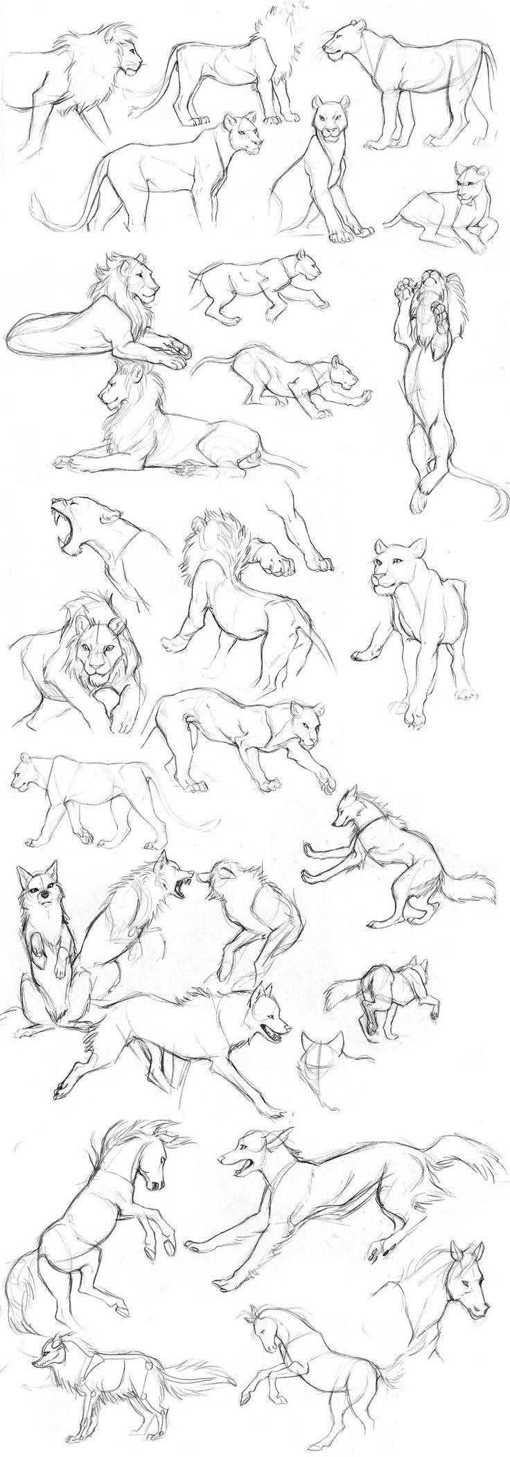 Animal sketches by Detkef on DeviantArt