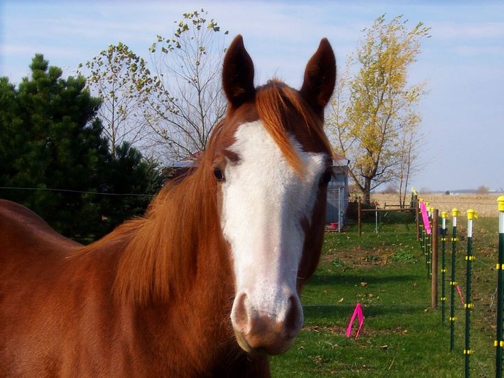 This is my paint mare, Penny. Had her since the night she was born. Her mom, Emmy, is also my horse. Penny is now 4 years old and what a sweet, gentle girl she is to have. Loves attention.