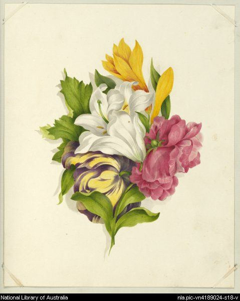Bouquet of flowers, ca. 1860 [picture].  between 1856 and 1865. 1 painting : gouache, glaze ; 22.5 x 18.3 cm.  Page of Album of Miss Eliza Younghusband, South Australia, 1856-1865 [picture]  From National Library of Australia collection  http://nla.gov.au/nla.pic-vn4189024-s18  nla.pic-vn4189024-s18