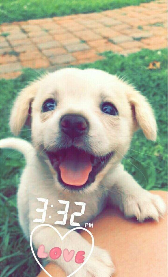 Perritos Perritos Tumblr Dogs Puppies Y Cute Animals