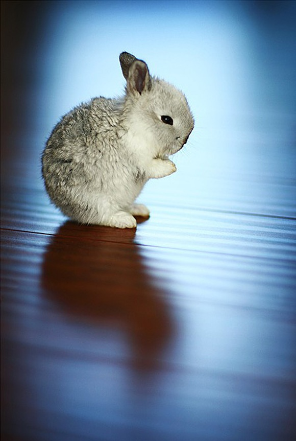 Cute Baby Rabbit Wallpapers 107 Best Rabbit Hare Images On Pinterest Rabbits Wild