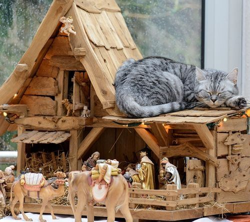 """Legend has it that a Tabby cat watched over the Baby Jesus in his manger.  Mary was so grateful to the Tabby that she touched its forehead and forever after all tabbies have been marked with the letter """"M,"""" for the Madonna."""