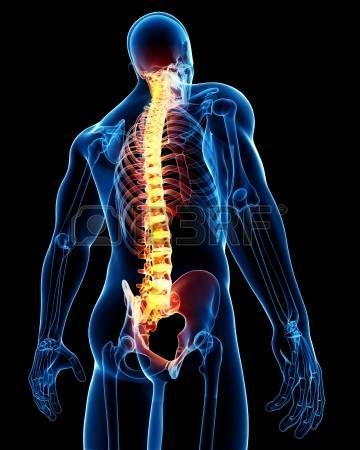 Image result for ryggrad sittande röntgen