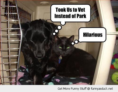 legrační vet vtip vzteklý nevrlý Kočka Pes živočišných vtipné foto fotografie pic obrázek obrázek fotografické obrazy fotky lol