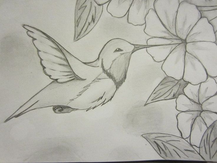 Hummingbird Drawings | Hummingbird Sketch by WOLFDEMON001 on deviantART