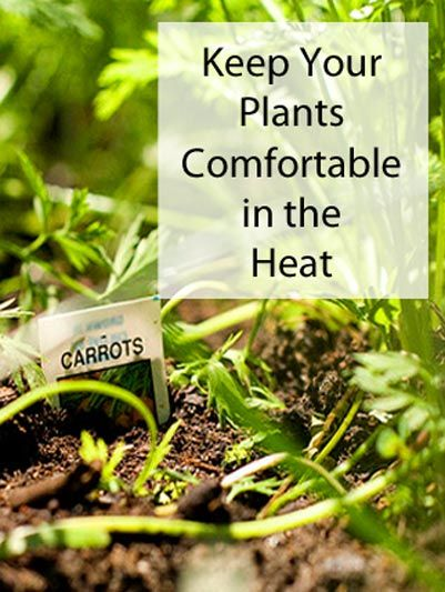 Keep Your Plants Comfortable in the Heat - Earls Court