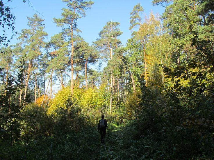 Jesienne krajobrazy na pieszym szlaku do Szestna.  www.it.mragowo.pl