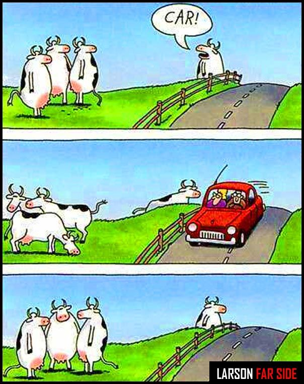 the farside cows. to this day, when i'm driving and see cows, i think of this.