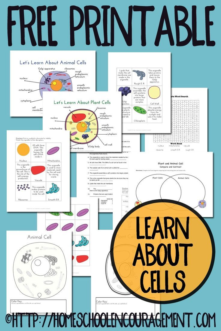 Plant and Animal Cell Printables Grades 4-6 | Plants, Free ...
