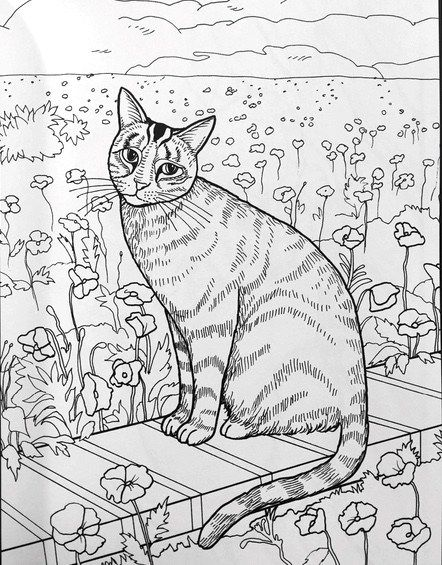 417 best coloring cats images on Pinterest Coloring books