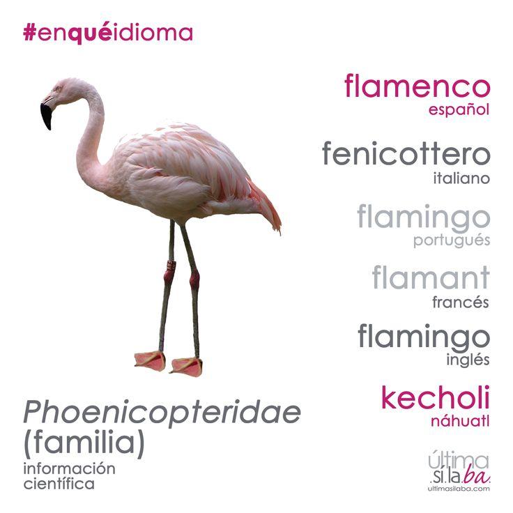 Los flamencos son aves grandes que pueden llegar a medir hasta 1.40 m de altura. Únicamente hay tres especies de estas aves el mundo: dos que habitan en América y otra que habita en Asia, África y Europa. Las aves más coloridas pertenecen a la especie que vive en el Caribe. ¿Cómo se dice «flamenco» en otros idiomas? ¡Descúbrelo aquí! Nos gustan las palabras. Nos encanta la #gramática. Somos Última Sílaba Comunicación.