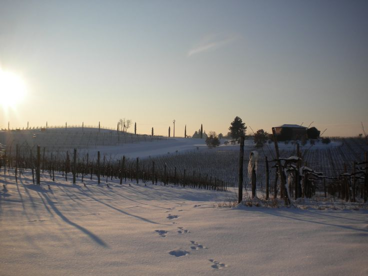 #Capriva #Collio #Brda #Fvg #winter #snow #winelovers