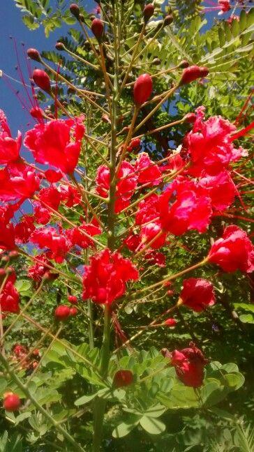 #T052015 Atividade- Flores