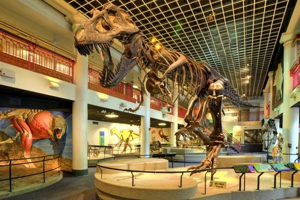 Academy of Natural Sciences. One of the world's foremost natural history museums. 1900 Benjamin Franklin Parkway, Philadelphia