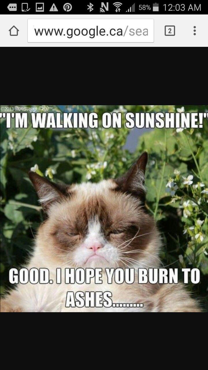 503ede80f3c67ced6f91f0bdab45ea11 grumpy cat quotes grumpy cat meme 37 best grumpy cat memes images on pinterest cat memes, funny pics