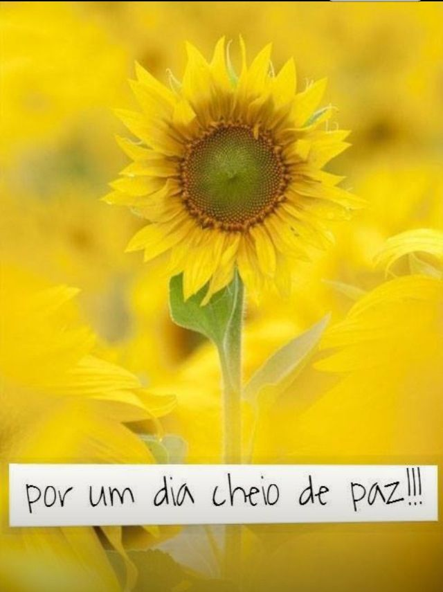 Eu sou girassol, você é meu Sol.... BOM DIA!!! | Frases de ...
