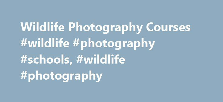 Wildlife Photography Courses #wildlife #photography #schools, #wildlife #photography http://maryland.remmont.com/wildlife-photography-courses-wildlife-photography-schools-wildlife-photography/  # WildlifeCampus is an international Distance Learning Provider offering a wide variety of Wildlife, Wildlife-related, Natural Science and Ecotourism Courses covering the spectacular diversity of life found on our planet and specifically on African savannas. WildlifeCampus is an established and…