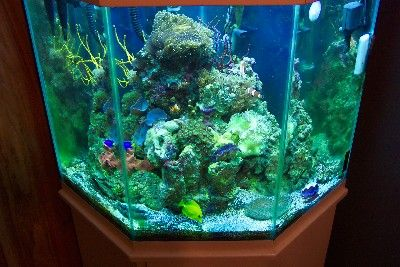 Photos of both small and large reef tanks photos brown for 50 gallon fish tank hood