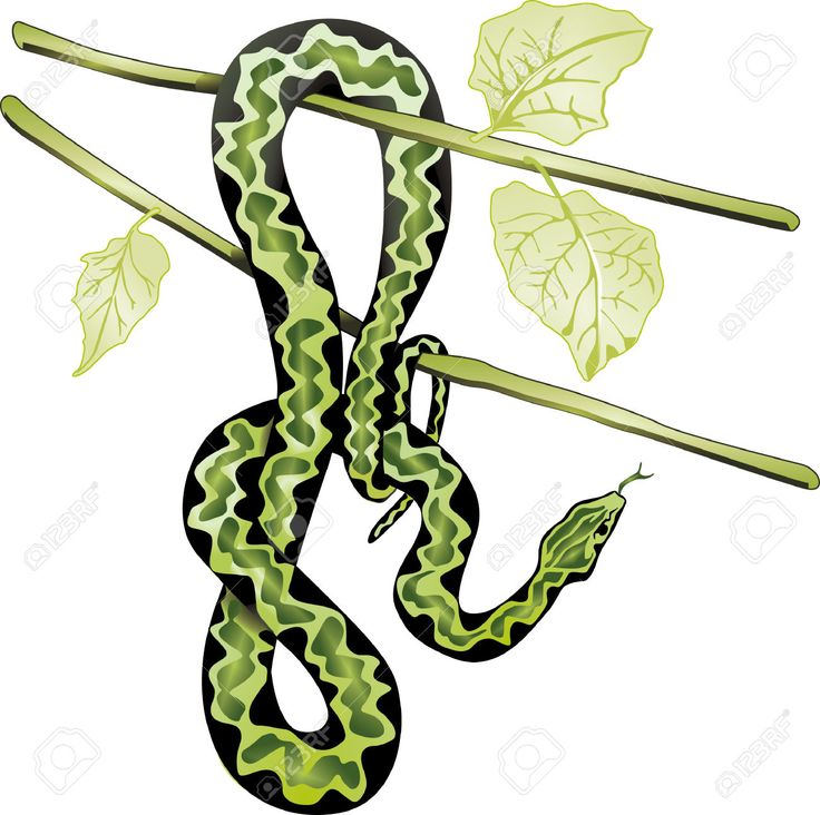 Image result for vectors snakes trees