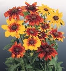 Eenjarige planten voor in je tuin of op je balkon