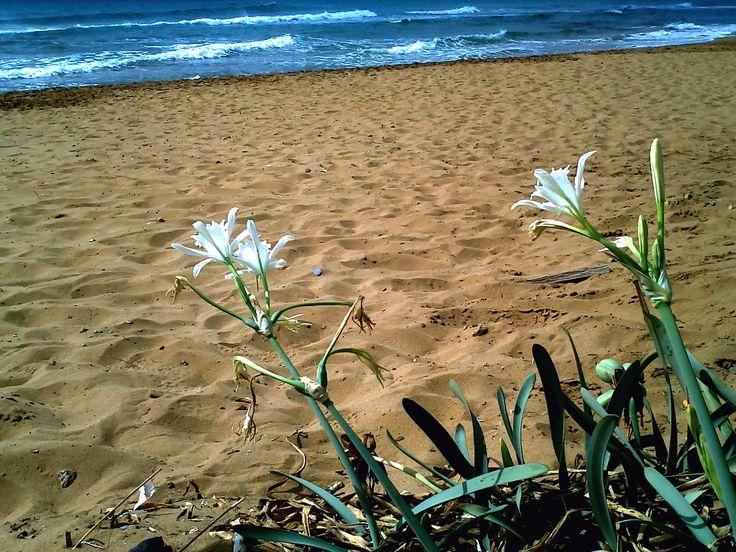 calblanque playa mediterráneo