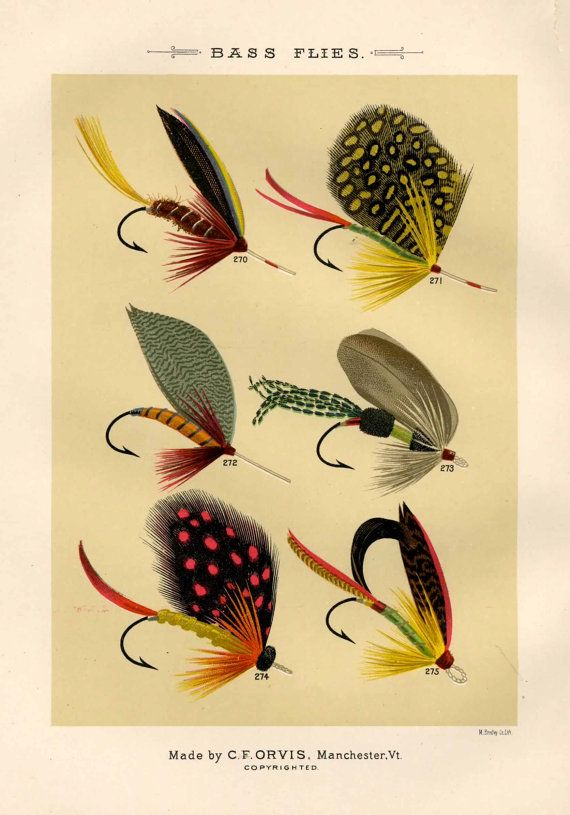 bass flies glorious fly fishing print no 1 by EPHEMERApress, $12.50
