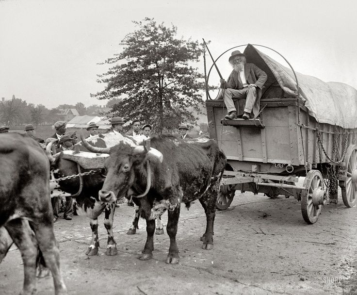 Emigrants Used Horses Oxen And Mules To Pull Their Wagons