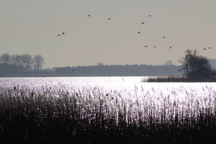 Mooi he! - Zeewolde - Flevoland -  Netherlands - door Sonja Kalee