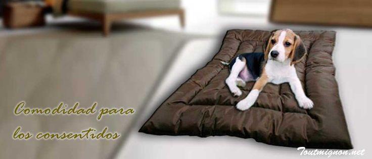 Camas, tapetes, colchones para perros. toutmignon.net