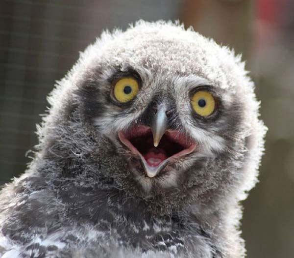 Funny Owl Pictures | Funny Images Show