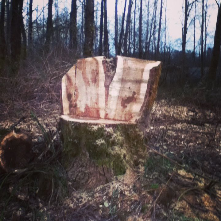 Wood Throne. #forest #fairies #woodland