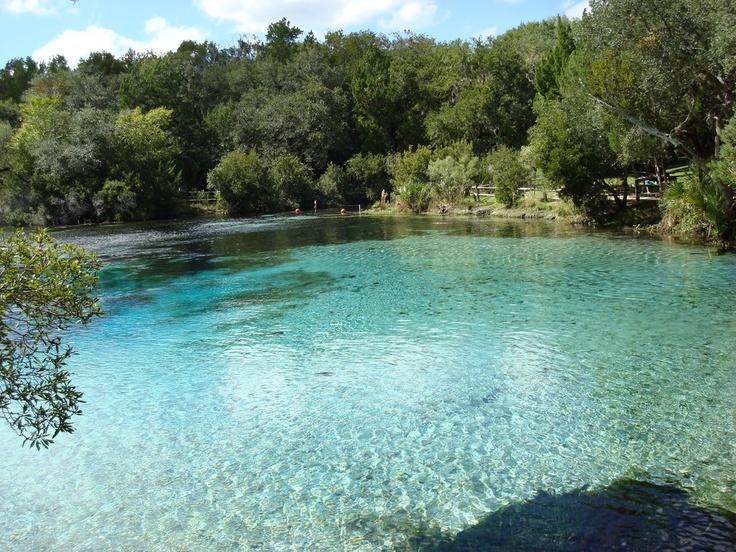 64 Best Silver Glen Springs Images On Pinterest Florida
