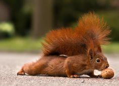 Eichhörnchen füttern ...