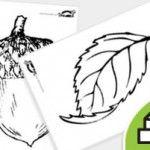 Herfst werkbladen/kleurplaten