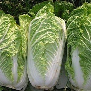 Varza chinezeasca, leguma minune care te fereste de ulcere si boli de inima[…]