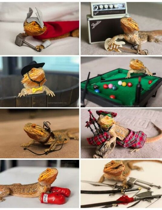 Bearded dragons.